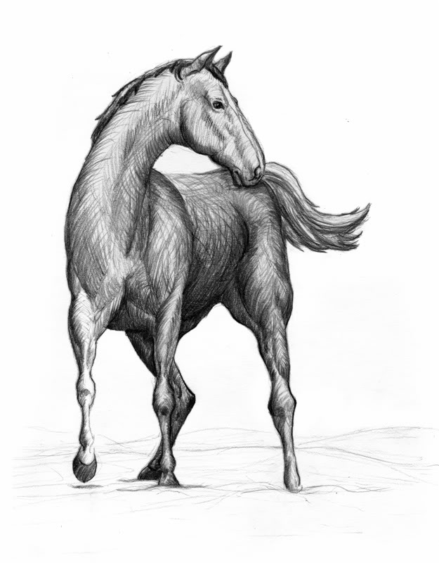 Horse Perspective Sketch
